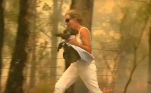 koala-incendio-australia